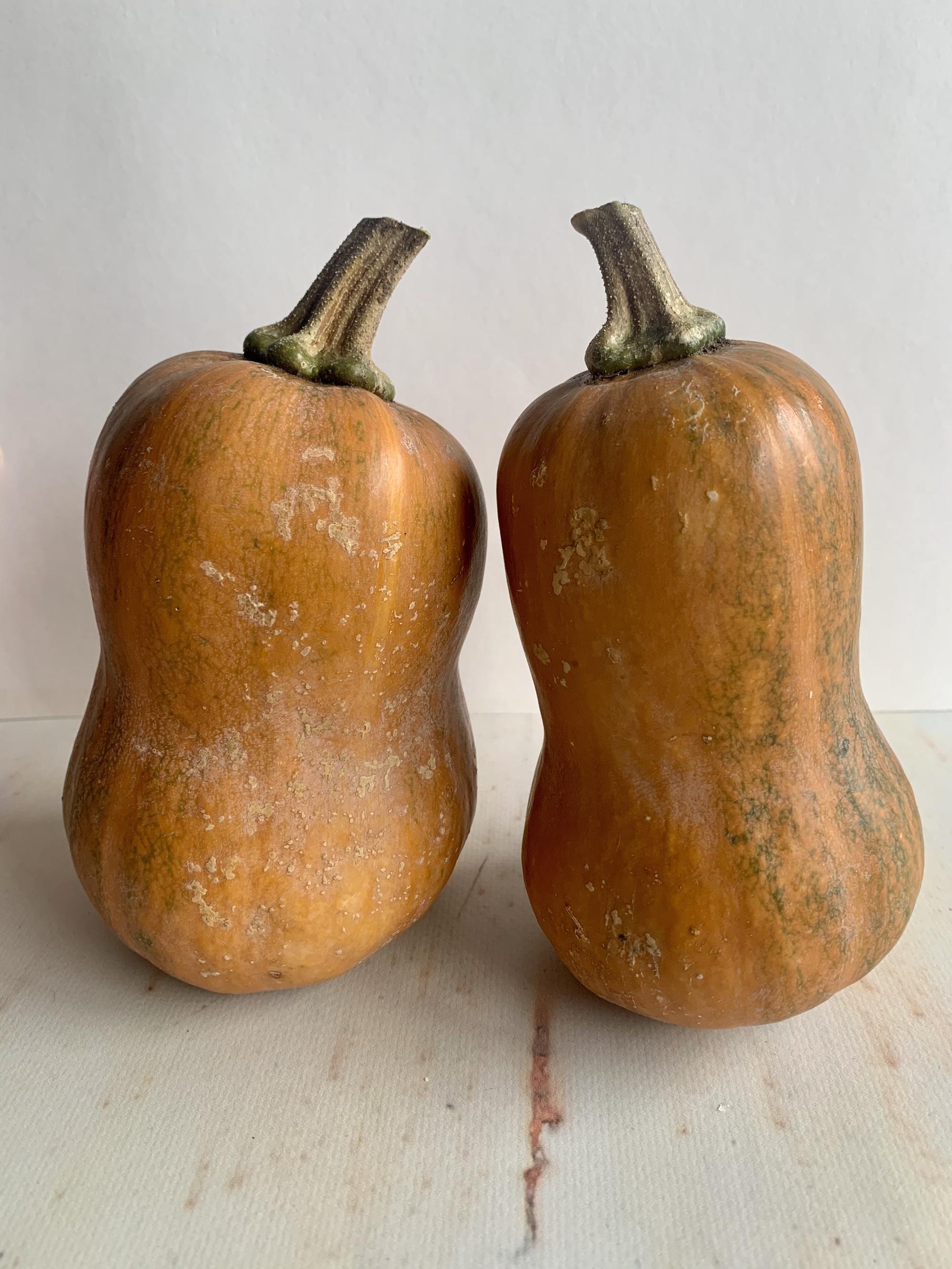 Two small Honeynut Squash